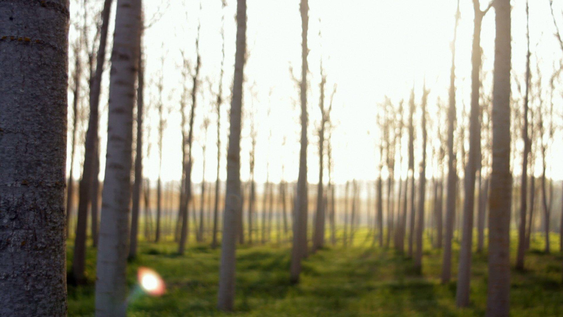 Il bosco incantato (Documentary)